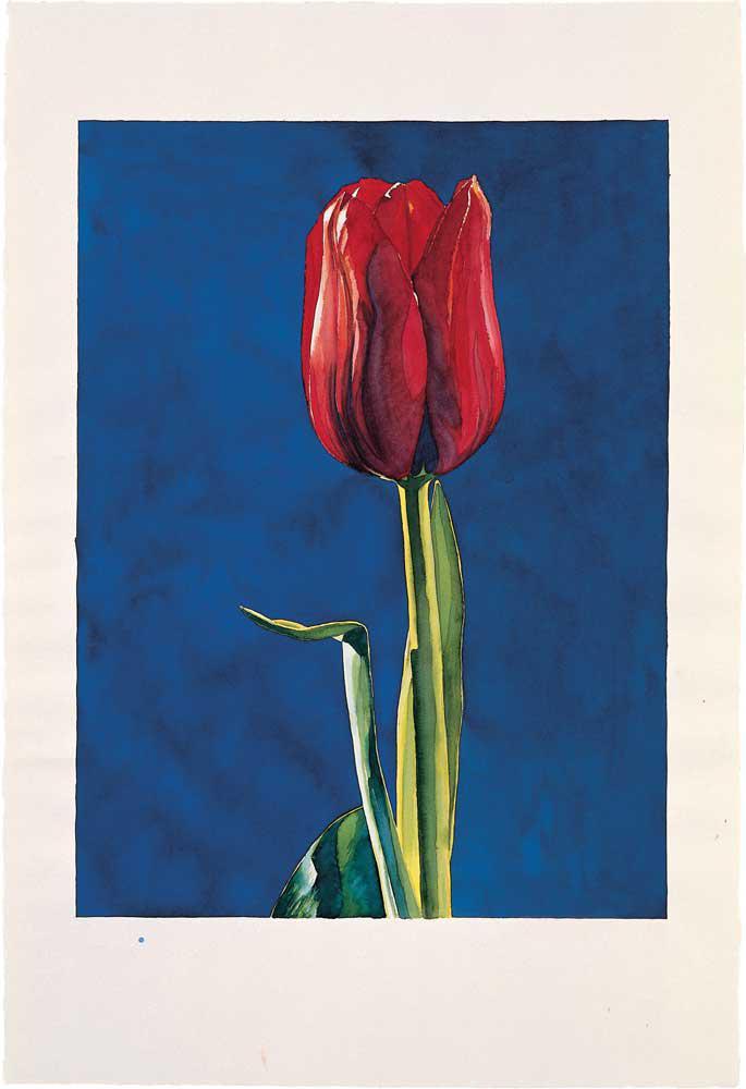 Tulip (Blue B.), ink on handmade paper, 112 x 76 cm, 2004