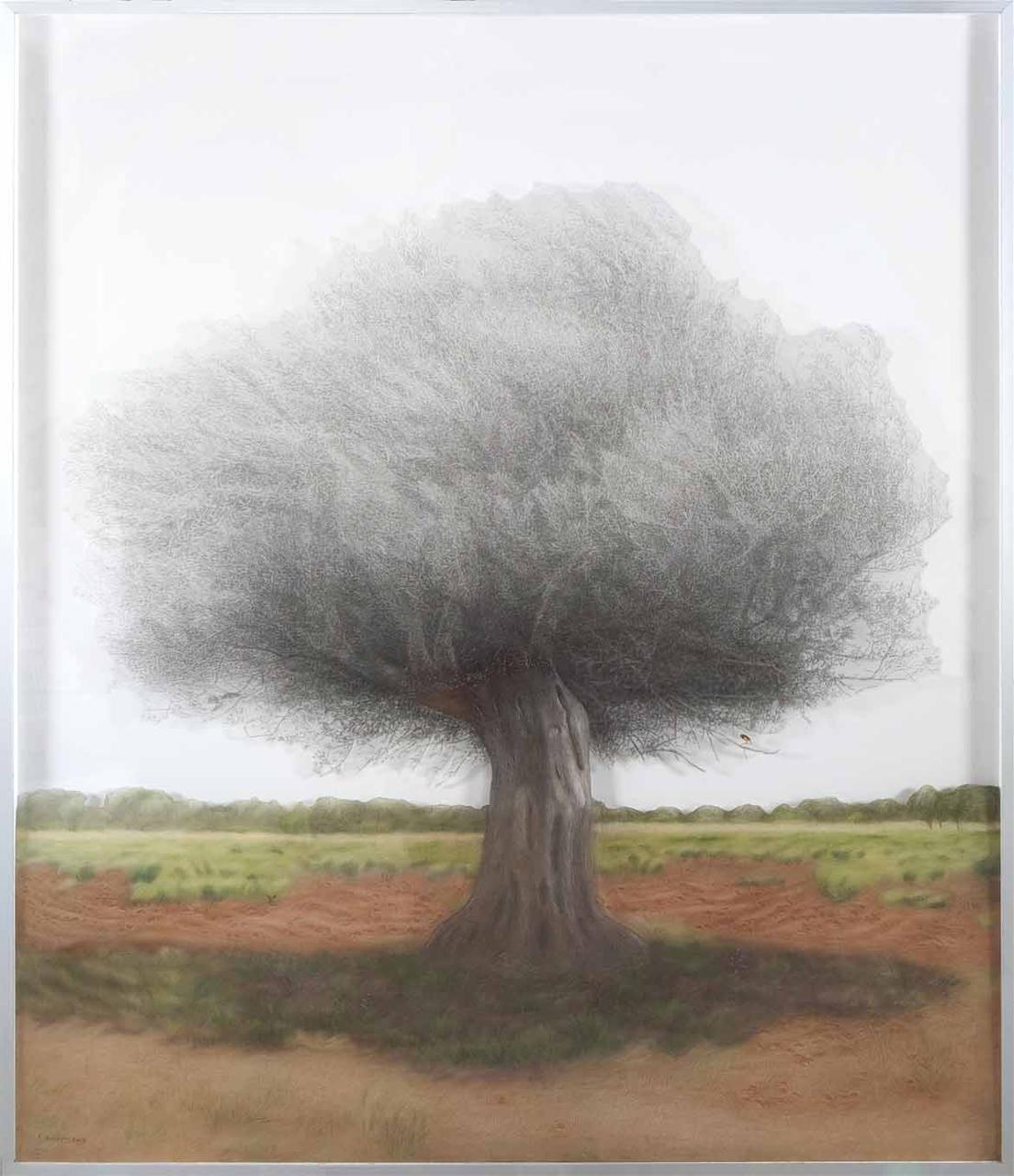 Olive Tree2, plexiglass dust and charcoal on transparent film, 169 x 200 cm, 2015
